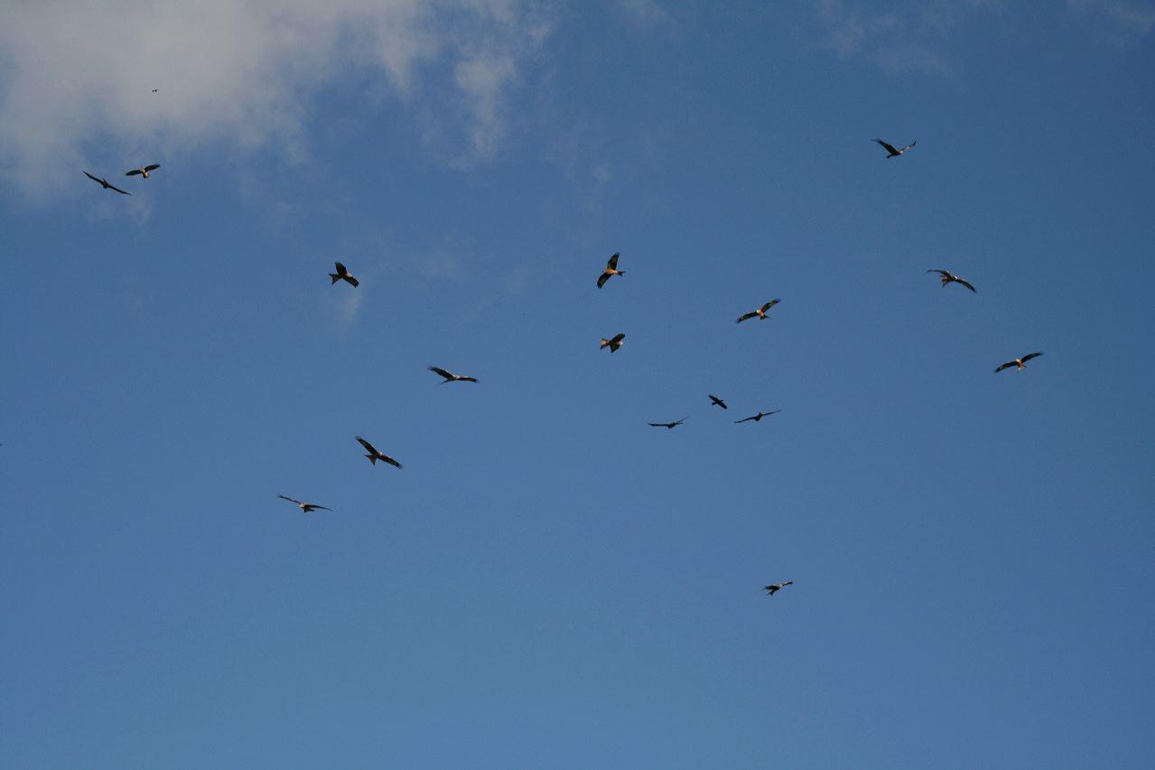 lots of kites1